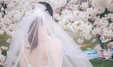 滿天櫻花散落間